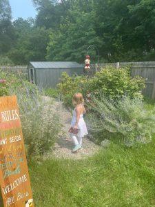 Strolling in the butterfly garden